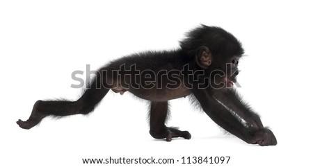 Baby monkey Stock Photos, Baby monkey Stock Photography, Baby ...
