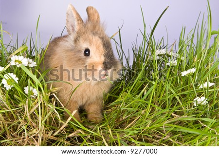 Baby easter bunny eating grass and daisies