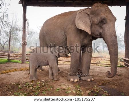 Elephant Stock Photo 12708835 Shutterstock