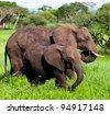 Baby Elephant Tanzania East Africa Serengeti - stock photo