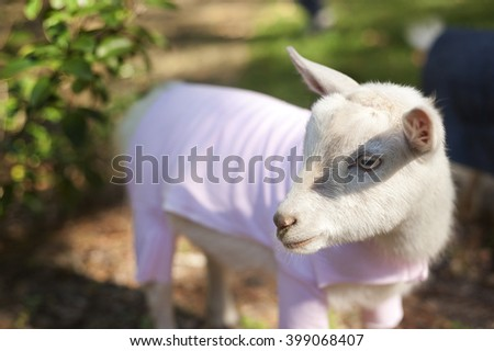 Baby Goat in Pajamas