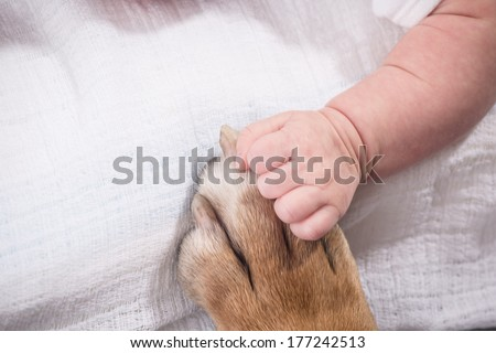 Baby hand and dog paw