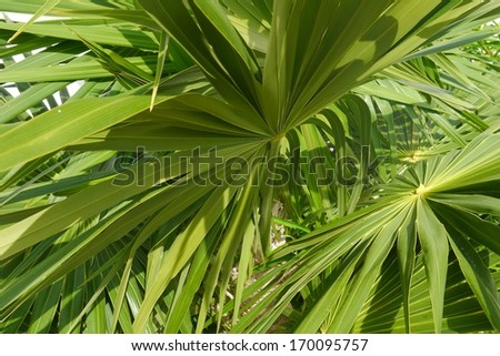 Background Abstract design leaves green plants jungle and palms