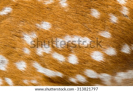 background antelope skins
