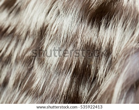 background gray fur coat from a raccoon