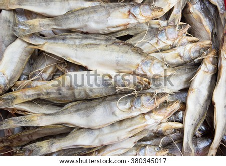Background of dried pike perch