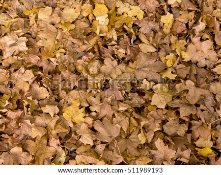 Background of fall leaves; Fallen autumn leaves