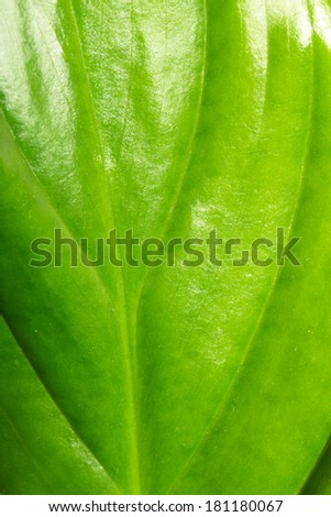 background of leaves of a flower. macro