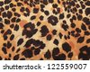 background of leopard skin pattern - stock photo