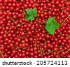 background of ripe juicy red currant berries. top view - horizontal photo. - stock photo