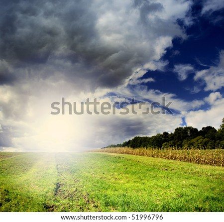 Background of sky and grass green field