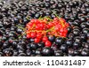 Background of the berries black and red currants. Photo Close-up - stock photo