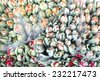Background of unopened flower buds of tulips - stock photo