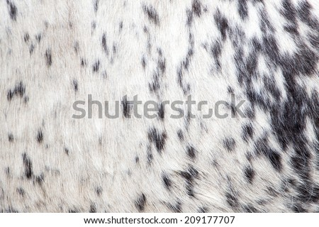 background of wool cow