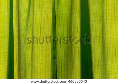 Background texture green