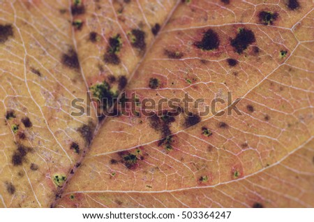 background texture of a fallen autumn leaf