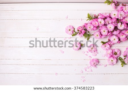 Background with bright pink   flowers on white  wooden planks. Selective focus. Place for text.