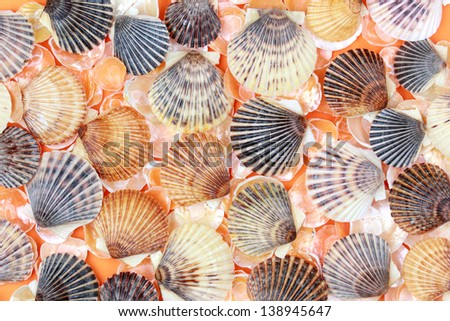 Background with colorful sea shells