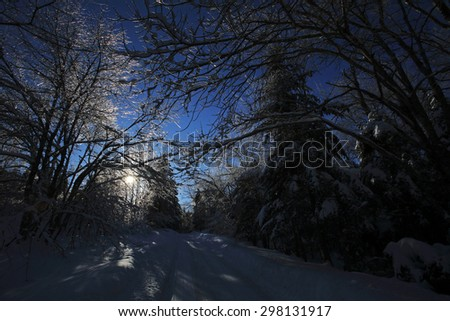 Backlighting highlights the ice-covered trees in this snow scene along a woods road in New Brunswick, Canada.
