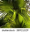 Backlit fronds of saw palmetto plant in Florida.  Lighting creates interesting patterns and shadows on fronds. - stock photo