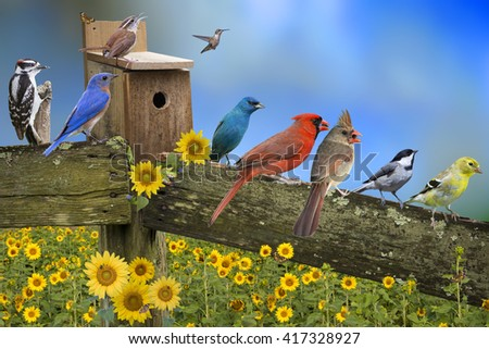 Backyard Bird Congregation on Weathered Fence Board