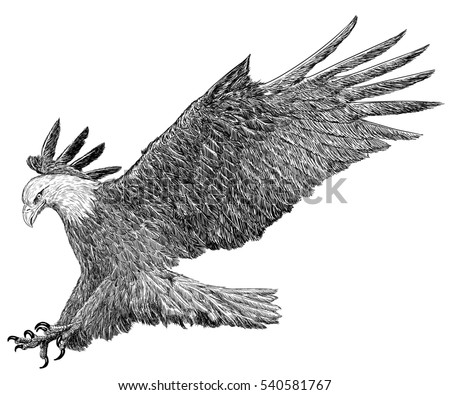 Perch Drawing Graphics Stock Vector 586954493 - Shutterstock