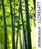 Bamboo forest background. Shallow DOF - stock photo