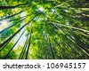 Bamboo forest with morning sunlight - stock photo