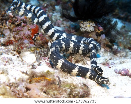 Related Pictures sea animals background stock photo 6651982 pictures