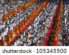 BANGKOK , THAILAND - MAY 8: unidentified people give food offerings to Buddhist monks on May 8, 2011 Pratunam in Bangkok, Thailand. Thai traditional Ceremony. - stock photo