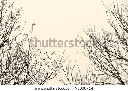 Bare branches against the sky in monochrome