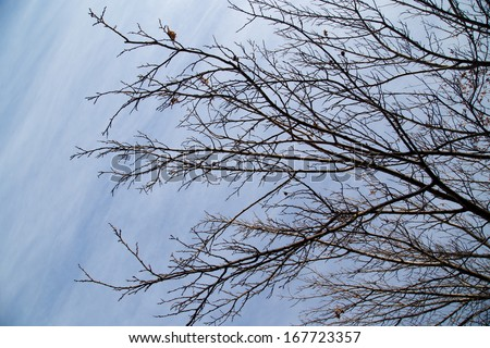 bare branches of a tree against the morning sky