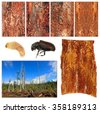 Bark beetle: larva, imago, bark galleries and damaged tree forest - stock photo
