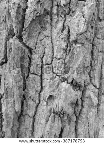 Bark of Tree, Black and White