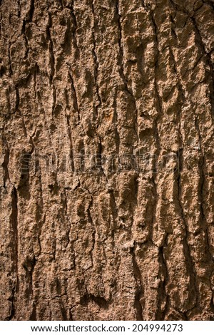 Bark Tree texture background only full frame in nature