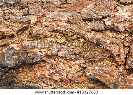Bark Tree Texture Background Pattern