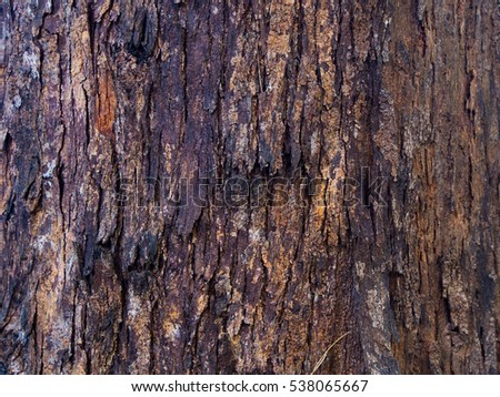 Bark, Wood texture, Wooden background, Pine