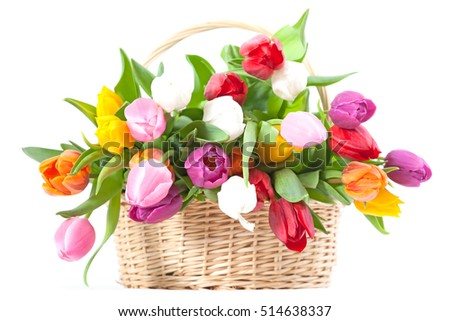 Basket full with tulips isolated on a white background