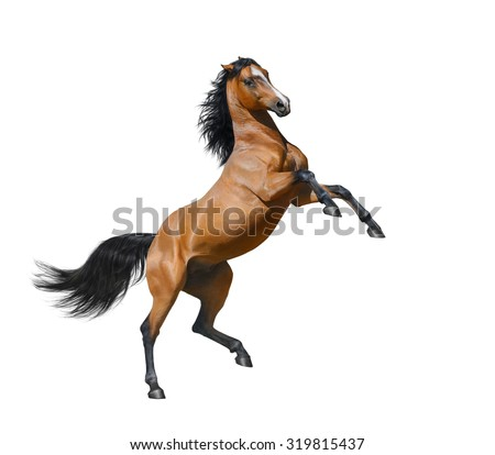 Bay horse rearing - isolated on a white background