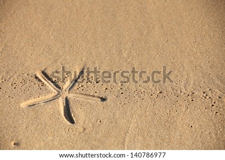 beach sand with starfish print as background