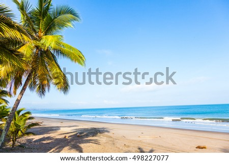 Beach with palm trees and calm sea in sunny day