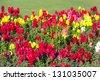 Beautiful Antirrhinum flowers in the garden in Muscat, Oman - stock photo