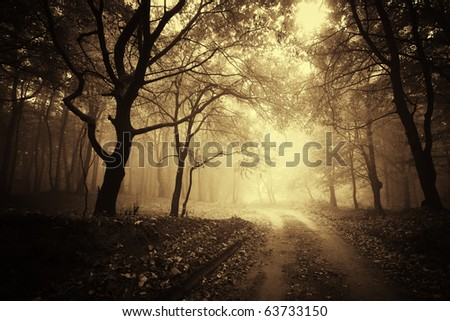 beautiful autumn in a golden forest with fog