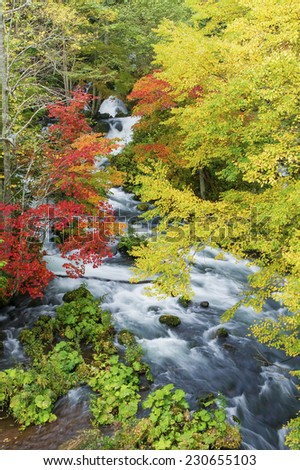 Beautiful autumn river lines with rocks and trees