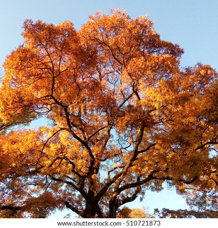 Beautiful autumn tree against the blue sky