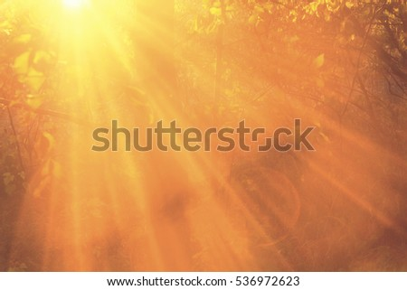 Beautiful beams of sun in the forsest, close up