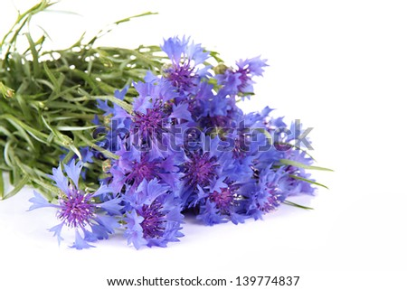 Beautiful bouquet of cornflowers ,isolated on white