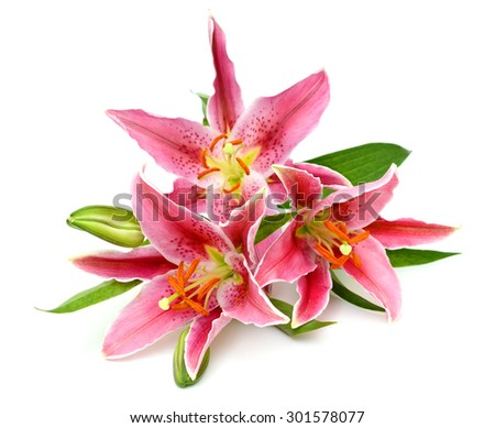 beautiful bouquet of pink lilies isolated on white background