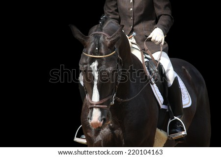 Beautiful brown sport horse portrait isolated on black background