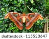 Beautiful butterfly on green screen, Thailand. - stock photo